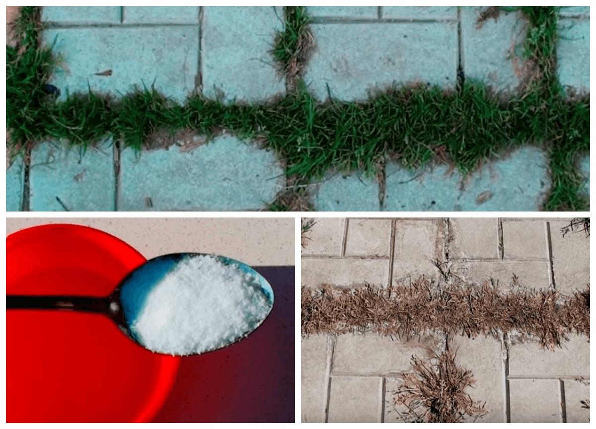 Соль и уксус от травы между плиткой